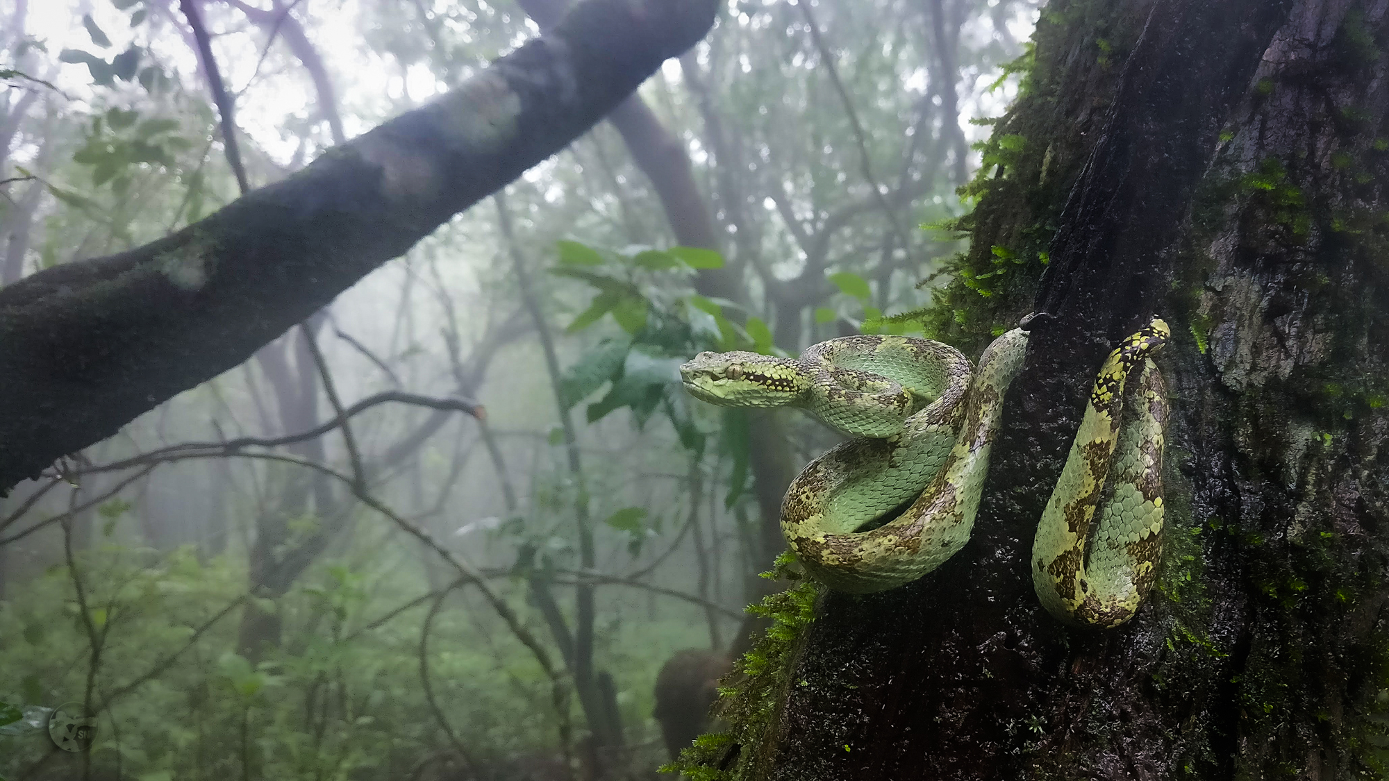 Beauties from the Western Ghats